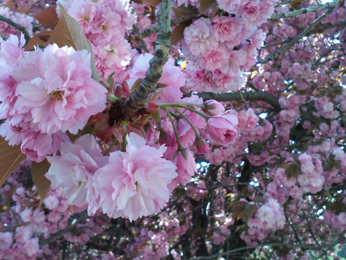 Springtime in Paris : the most beautiful gardens